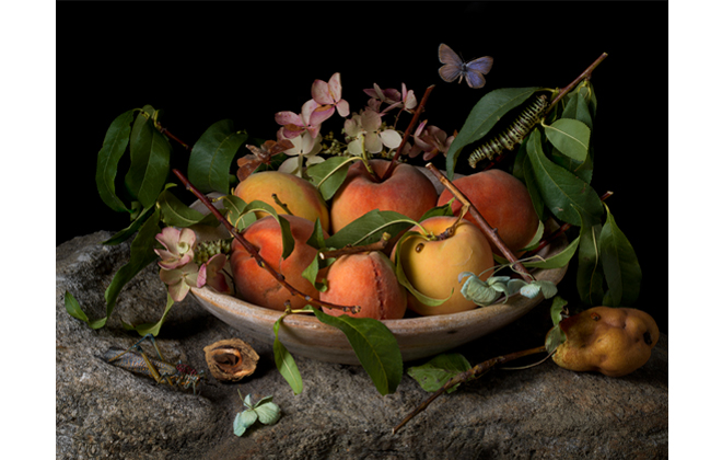 Peaches and Hydrangeas, After G.G., 2015